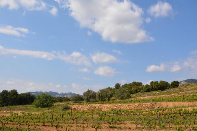 location saisonnière en Vaucluse, Provence, Beaumes-de-Venise, Gigondas Vacqueyras, gîte avec piscine chauffée et clime