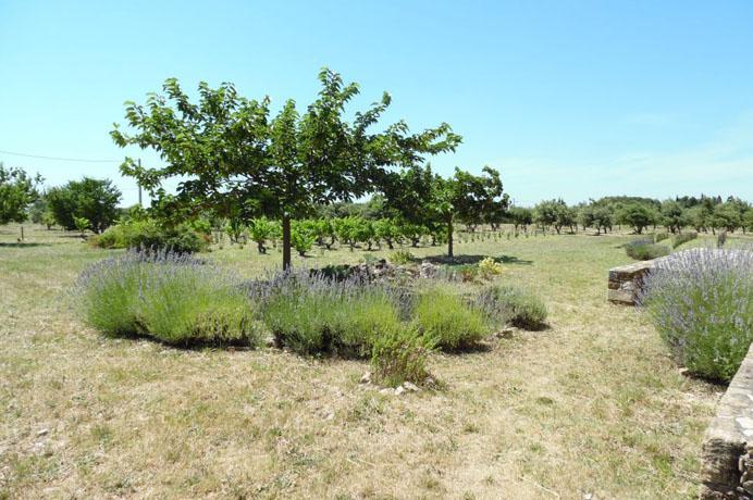 investissement en Provence truffes vin location saisonnière