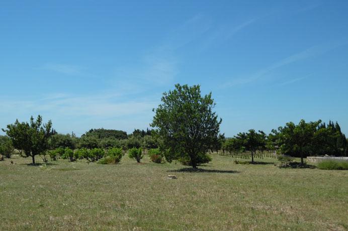 a vendre truffière, grote mas op een terrein van bijna 2 hectare kopen met prachtig zicht